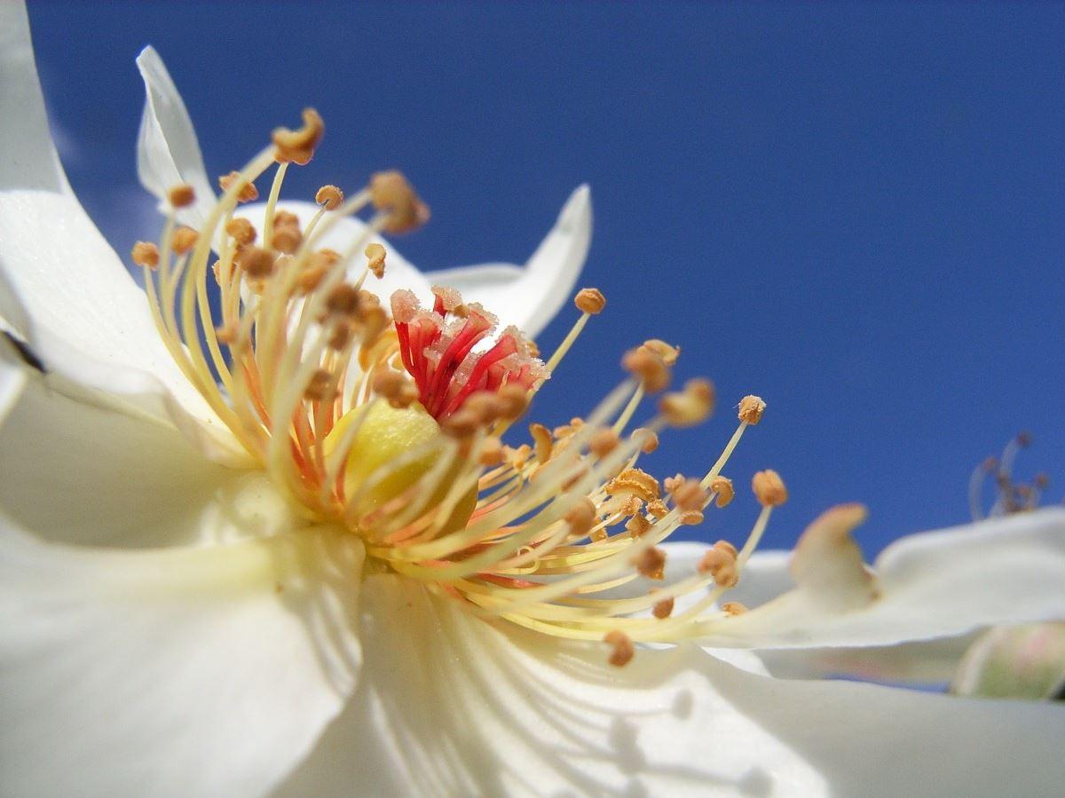 Белый сад: тренд белых цветов в лунном саду